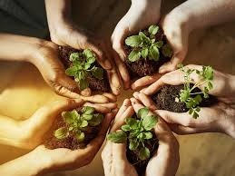 Proteger el medio ambiente es proteger la vida