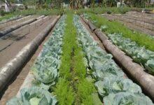 Evalúa de Bien a Sandino grupo nacional de la Agricultura Urbana Suburbana y Familiar