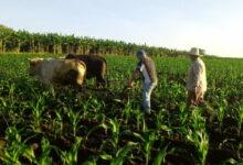producciones agrícolas san luis