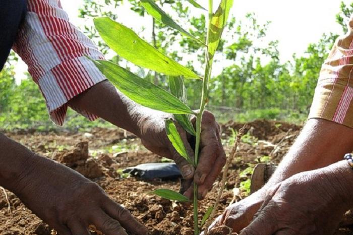 Trabajadores forestales merecedores de reconocimiento y admiración
